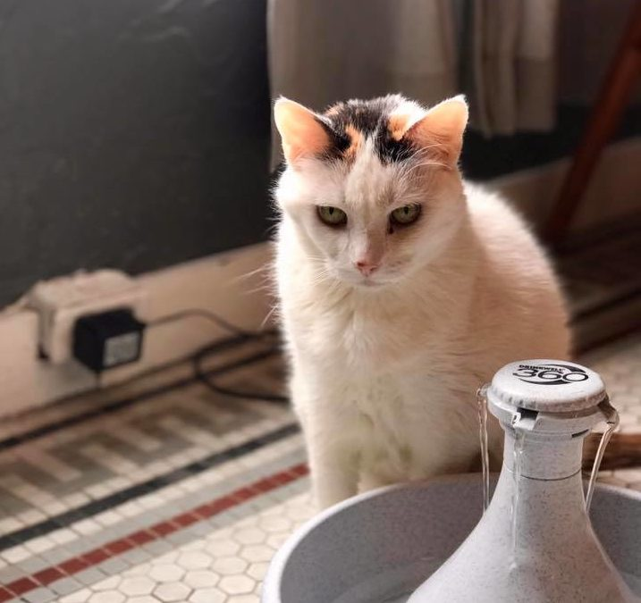 Moving? Please Don't Leave Me Behind. – Your Cat