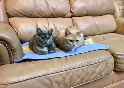 GOLDIE & SARABI – GREEN BAY