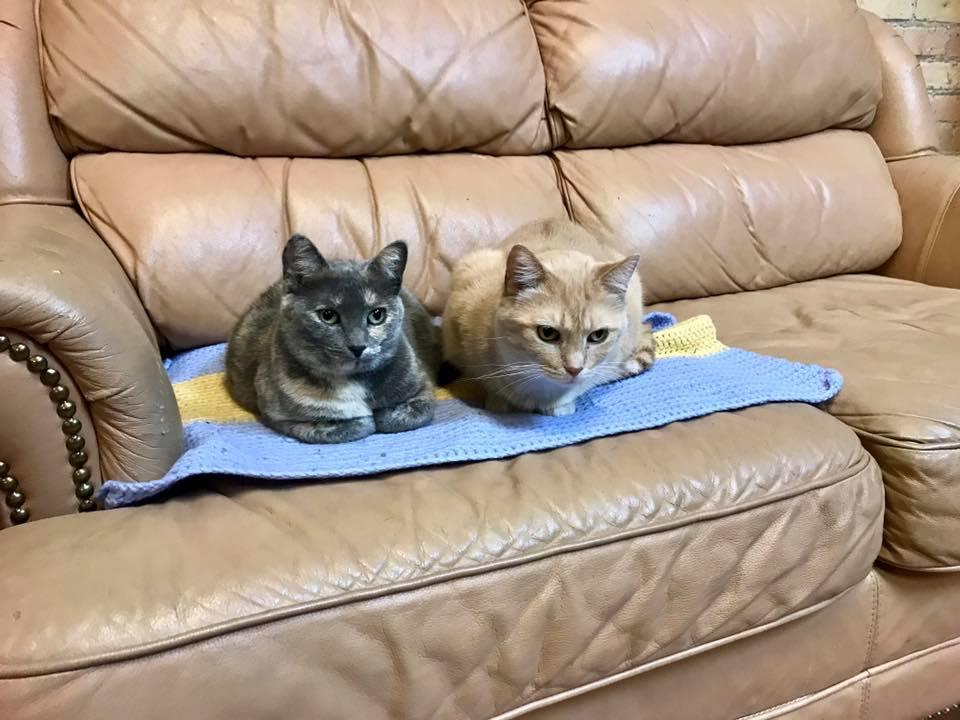GOLDIE & SARABI