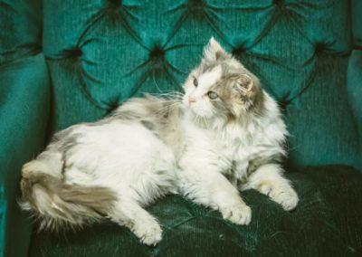 MIRA CAT