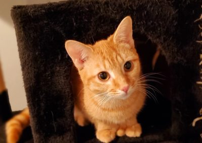 CARI CAT