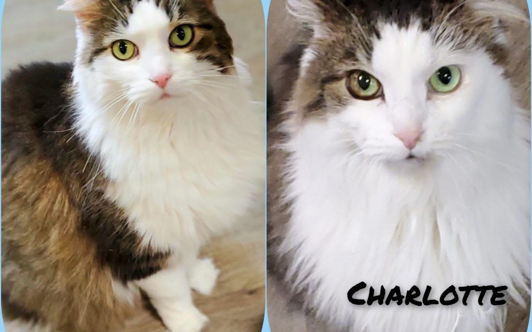 CHARLOTTE & CHADO